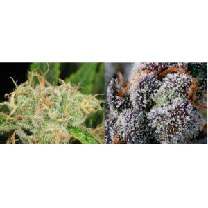 Flower Novice Combo – Two 1/8 oz Premium Cannabis Flower